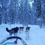 Photo de Arctic Husky Farm
