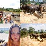 Pinnawala Elephant Orphanage is an orphanage, nursery and captive breeding ground for wild Asian elephants.