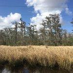 More February swamp scenery.