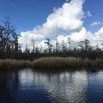 Out on the bayou.
