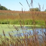 Late Summer / Early Fall at Elm Creek