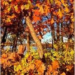 Elm Creek Park Reserve - Autumn Colors