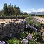 Foto de Emiliana Organic Vineyards