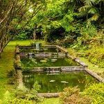 Photo de Parque Terra Nostra