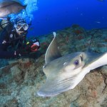 Photo of Club de Buceo Rincon de Arona