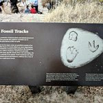 Large signs telling you what to look for. Some of the prints are covered in silt due to the rece