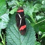 Butterfly Conservatory in Niagara Falls, Ontario, Canada