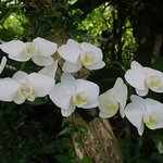 Many orchids throughout the gardens