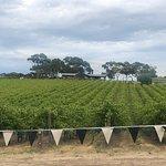 Mollydooker Wines照片