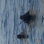 Bilde fra Dressel Divers