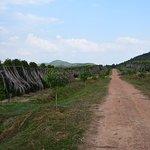 Photo de La Plantation