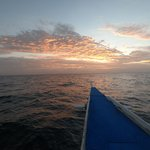 Beautiful sunrise boat trip to see the threshers