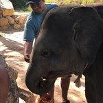 Ảnh về Elephants Retirement 9 Dee