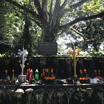 Buddhist Religious rituals around the Bodhi tree