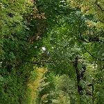 Gärten von Schönbrunn Foto