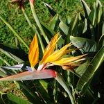 Photo de Madeira Botanical Garden