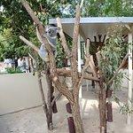Photo de Lone Pine Koala Sanctuary