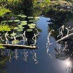 Hans Godo Frabel - Long arms walking through a pond