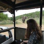 Encounter with elephant