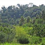 Belle vegetation