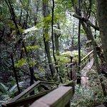 The Glenfern Sanctuary Loop Track