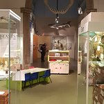 Colchester's Natural History Museum Foto