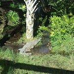 Foto de Central Florida Zoo & Botanical Gardens