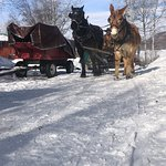 صورة فوتوغرافية لـ ‪Aspen Carriage and Sleigh Day Tours‬