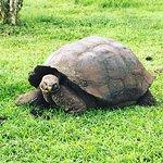 Giant tortoise excursion