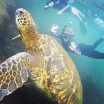 Snorkelling with green sea turtles and other wildlife off Isabela Island