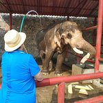 Фотография Hutsadin Elephant Foundation