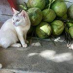 Photo de Lanta Animal Welfare