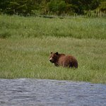 Grizzly at Glendale Cove