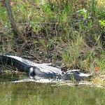 Φωτογραφία: Black Point Wildlife Drive