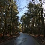 Landscape - Center Parcs Elveden Forest Photo