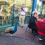 Bild från Audubon Zoo