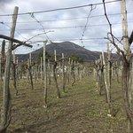 Foto de Cantina del Vesuvio