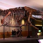 Esqueleto do T-Rex