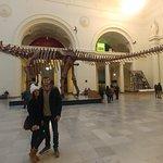 Esqueleto de um brontossauro