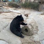 Photo of Beijing Zoo