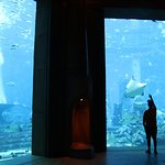 Yes, the Aquarium is big (this is just a small part of the aquarium)