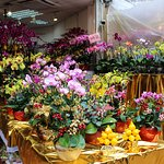 Just one of the flower stalls. Colourful and dramatic!