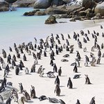 Фотография Boulders Penguin Colony