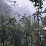 Monsoon through the trees