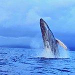 Billede af Ultimate Whale Watch & Snorkel
