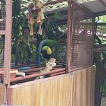 Photo de Jaguar Rescue Center
