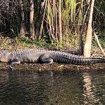 Everglades National Park Foto
