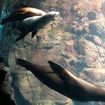 Photo de Osaka Aquarium Kaiyukan