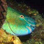 Foto di Rasdhoo Dive Centre