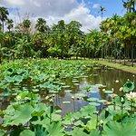 Фотография SSR Botanic Garden